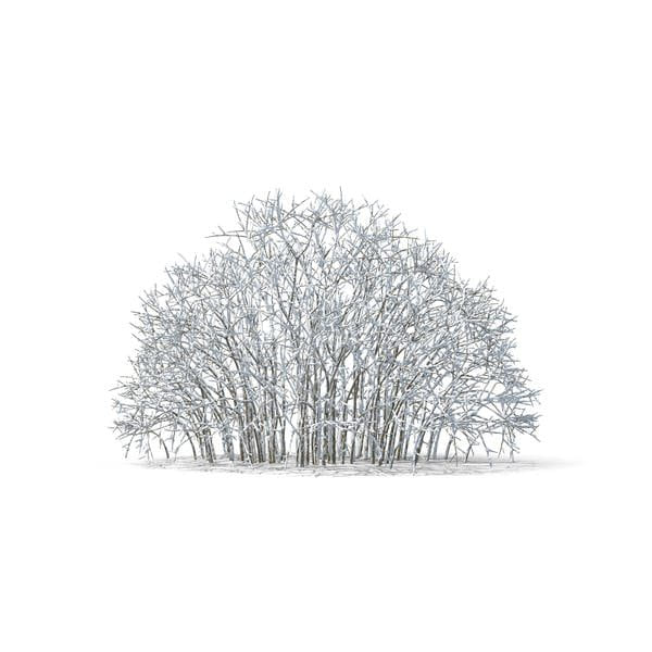 Bare Tree Covered in Snow (Turbo Premium Space)