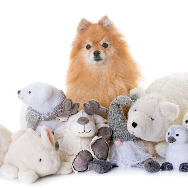 Canine friend 03 (Turbo Premium Space)