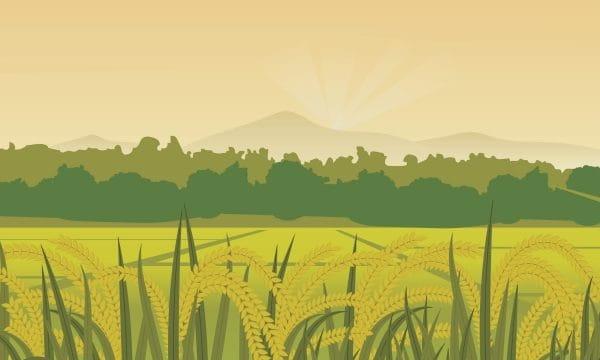 Field Hometown Sky Paddy Illustration