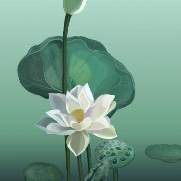 Flowers Lotus Lotus Leaf White Lotus Illustration (Turbo Premium Space)