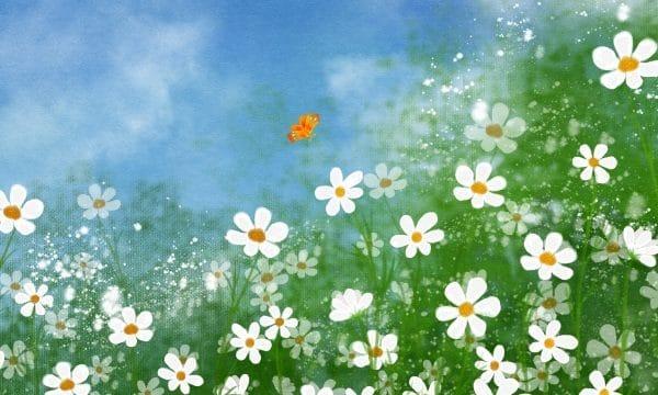 Hand Painted Illustration Flower Flowers Illustration (Turbo Premium Space)