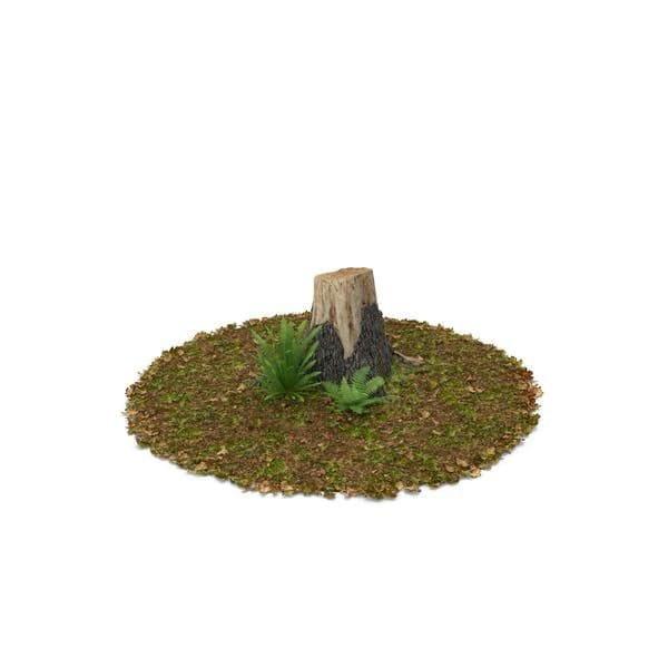 Stump with Ferns