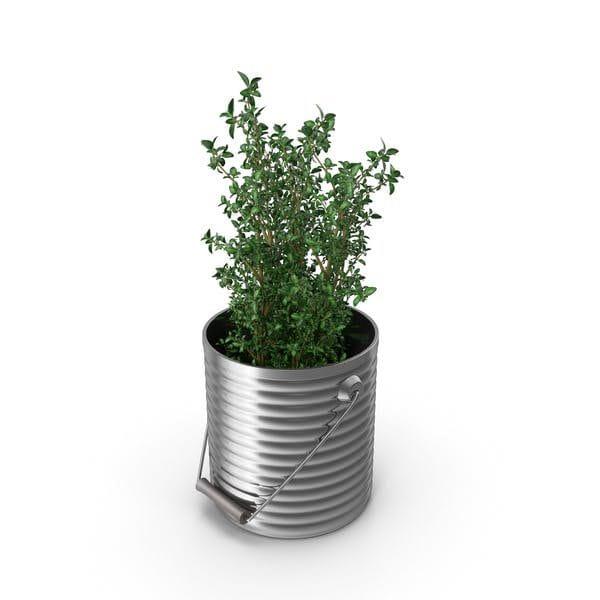 Thyme Plant (Turbo Premium Space)