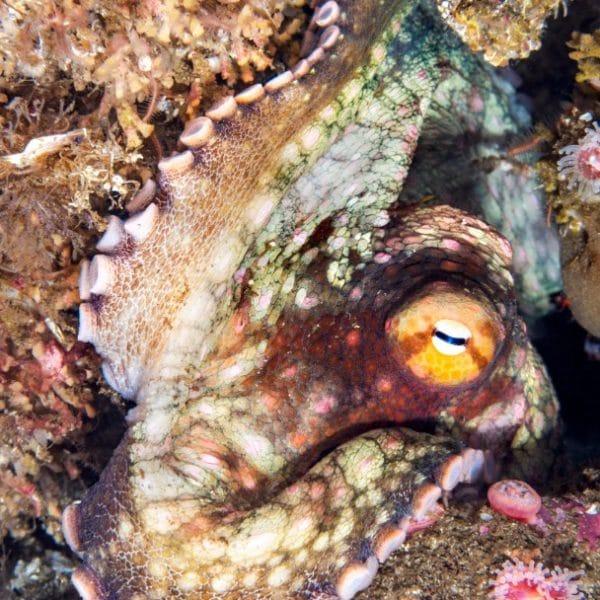 Underwater world 04