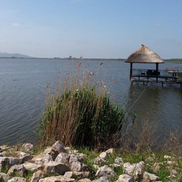 Beautiful Scenery With Sunny Lake Landscape